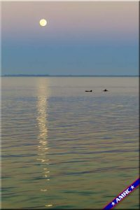 Dolphins Play under a Full Moon